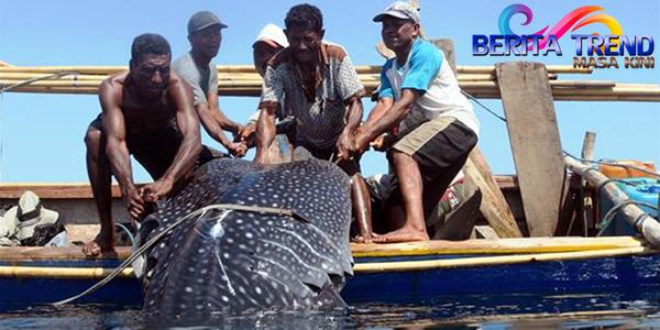 Pemburuan paus di Desa Lamalera