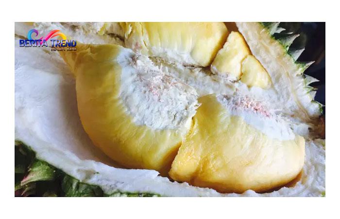 5 Manfaat Biji Durian Bagi Kesehatan yang Tak Banyak Orang Tahu