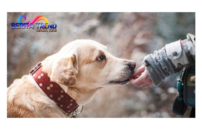 Seekor Anjing Ditemukan Hidup di Tengah Puing Bangunan akibat Tanah Longsor